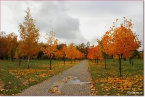 Фото Орши – золотая осень в Парке героев