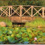 Фото Орши – мостик на пруду у костёла